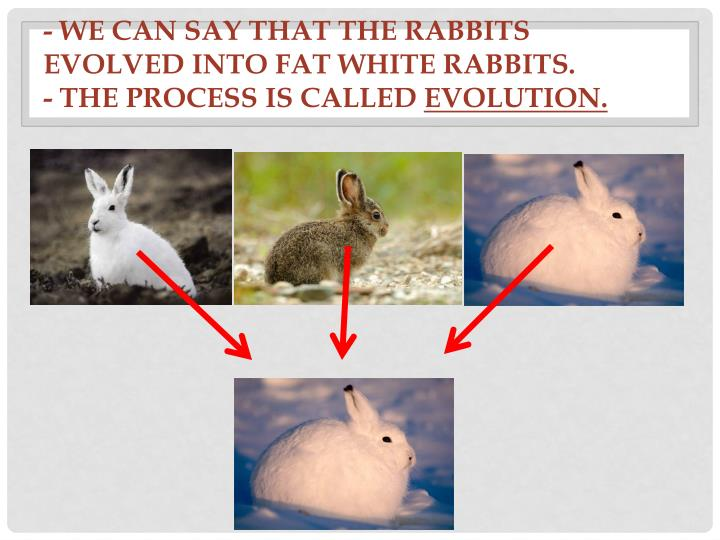 - We can say that the rabbits evolved into fat white rabbits.