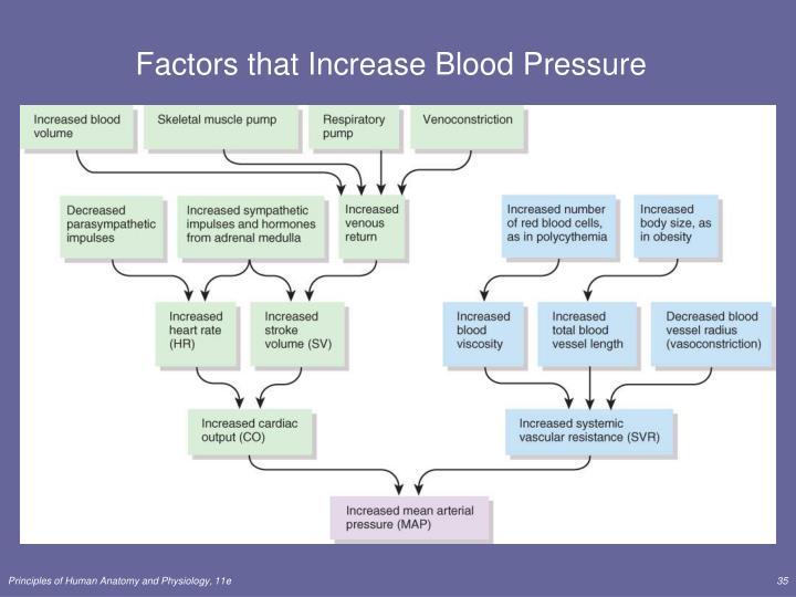 Factors that Increase Blood Pressure