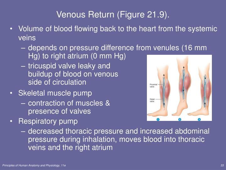 Venous Return (Figure 21.9).