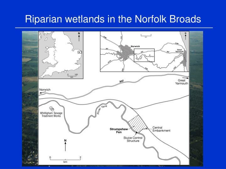 Riparian wetlands in the Norfolk Broads