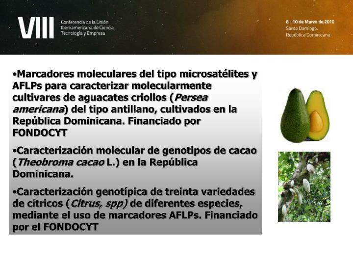 Marcadores moleculares del tipo microsatélites y AFLPs para caracterizar molecularmente cultivares de aguacates criollos (