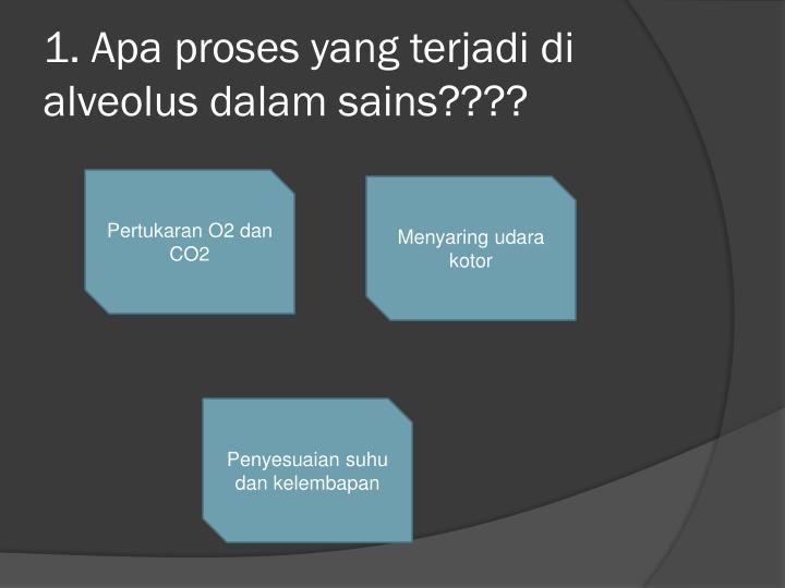 1 apa proses yang terjadi di alveolus dalam sains