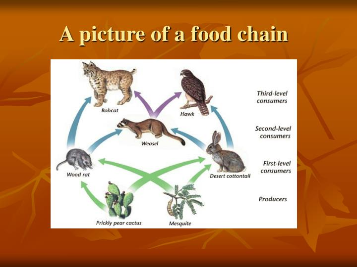 A picture of a food chain