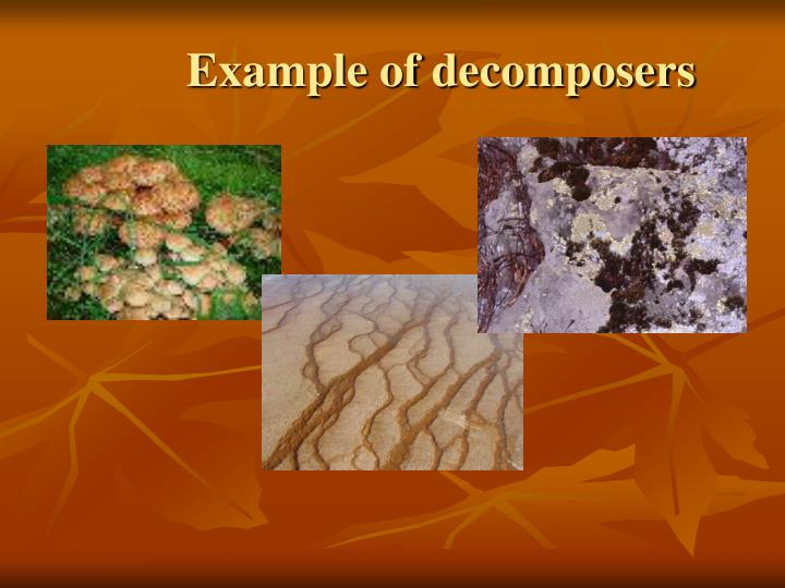 Example of decomposers