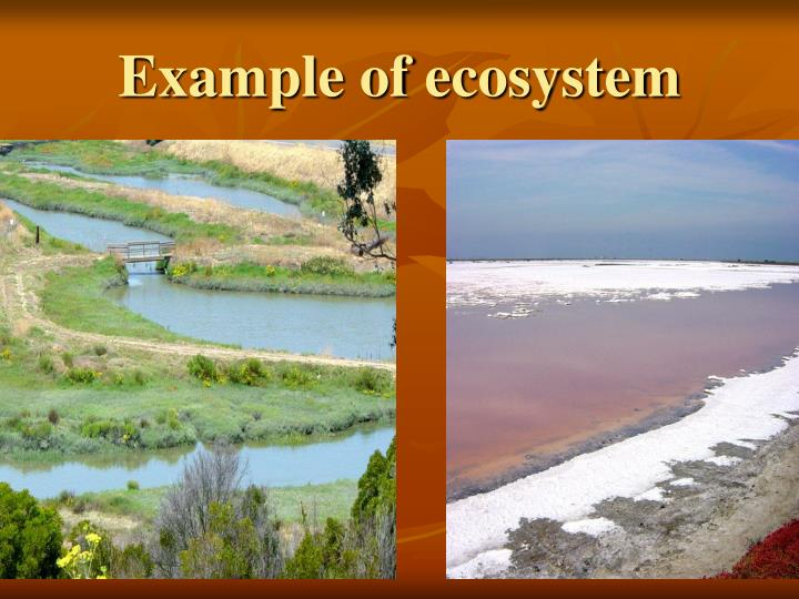 Example of ecosystem