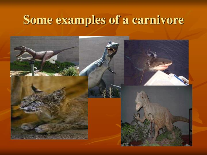 Some examples of a carnivore