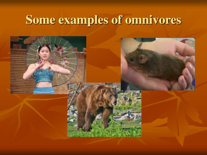 Some examples of omnivores