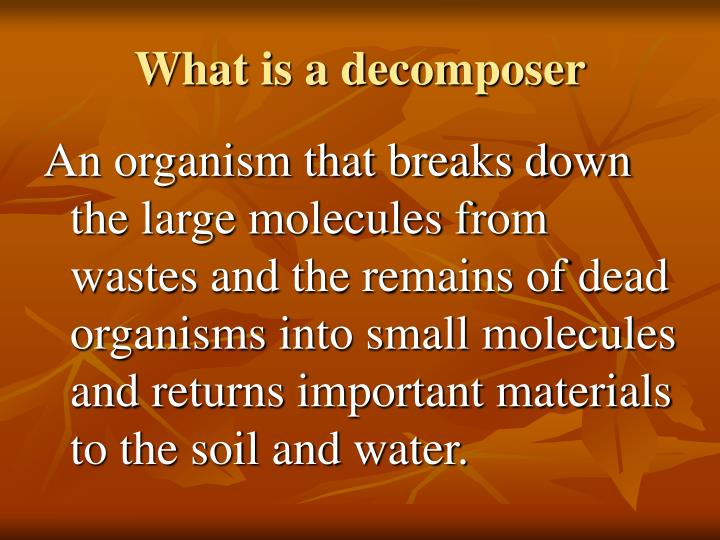 What is a decomposer