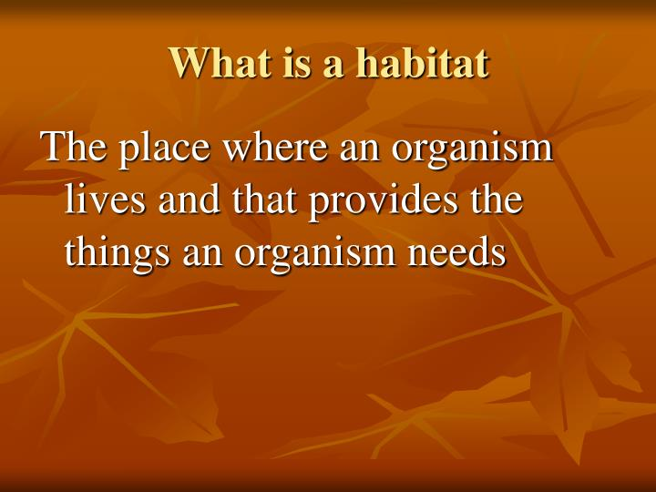 What is a habitat