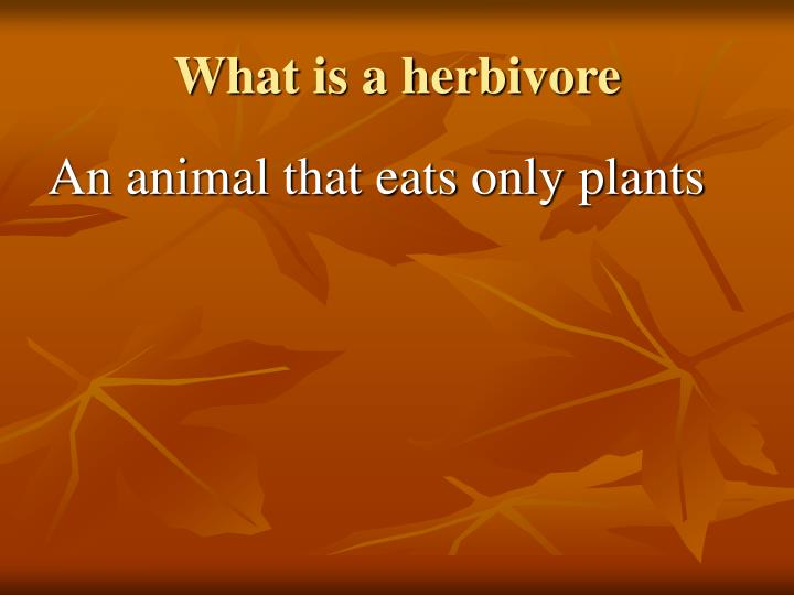 What is a herbivore