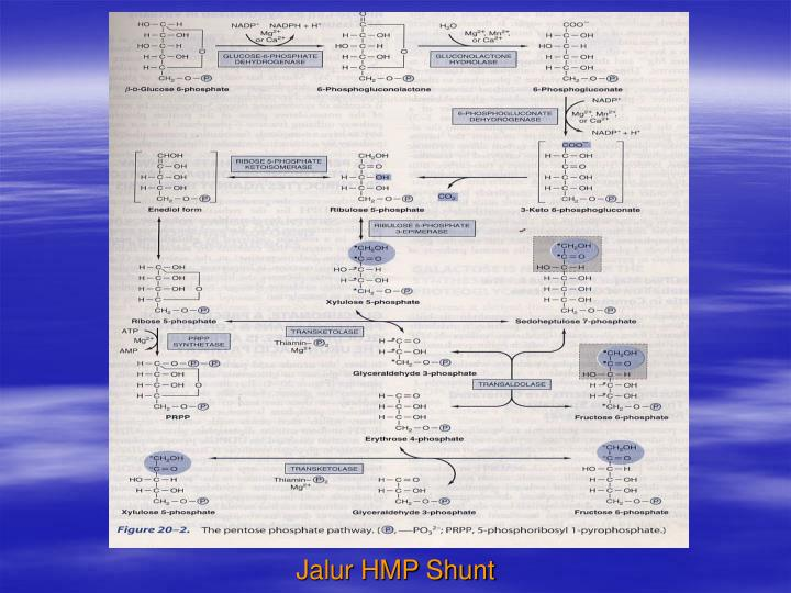 Jalur HMP Shunt