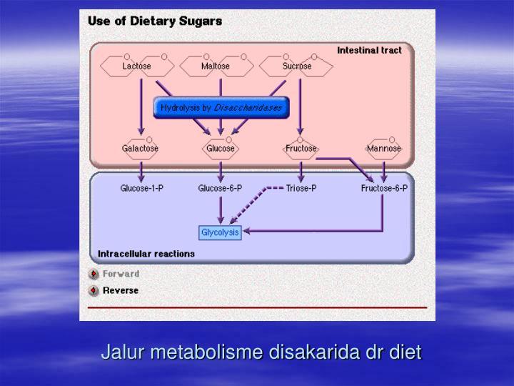 Jalur metabolisme disakarida dr diet