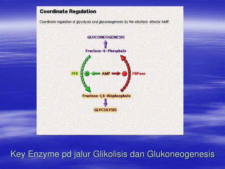 Key Enzyme pd jalur Glikolisis dan Glukoneogenesis