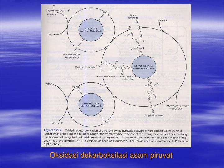 Oksidasi dekarboksilasi asam piruvat