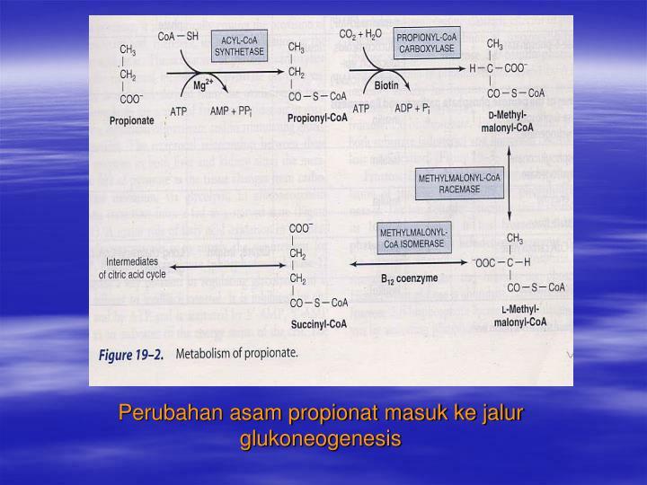 Perubahan asam propionat masuk ke jalur glukoneogenesis