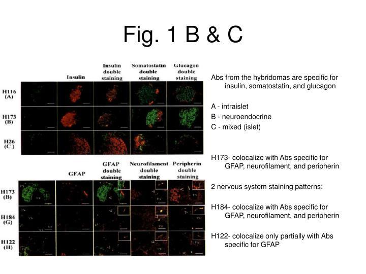Fig. 1 B & C