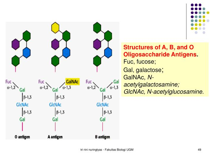 Structures of A, B, and O Oligosaccharide Antigens