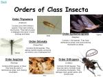 orders of class insecta