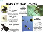 orders of class insecta2