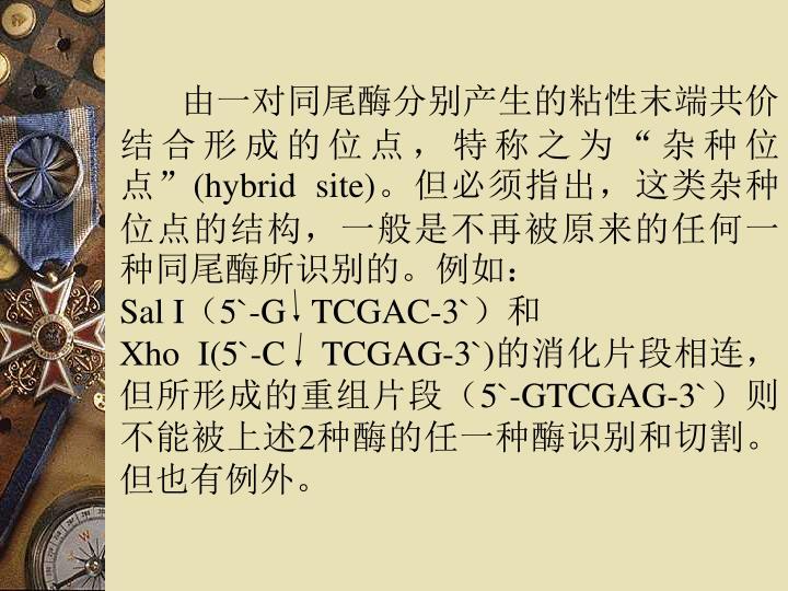"""由一对同尾酶分别产生的粘性末端共价结合形成的位点,特称之为""""杂种位点"""""""