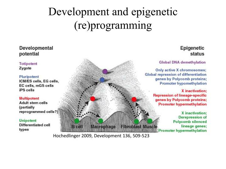 Development and epigenetic (re)programming