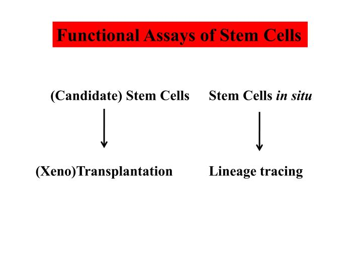 Functional Assays of Stem Cells
