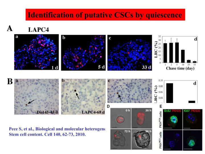 Identification of putative CSCs by quiescence