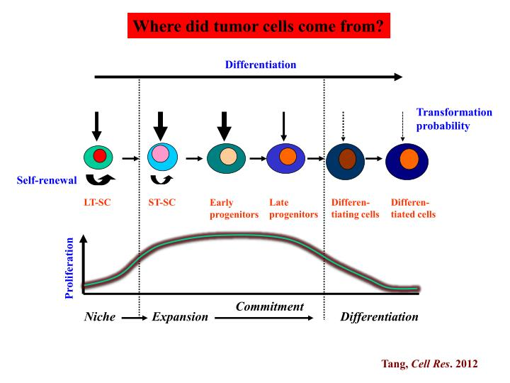 Where did tumor cells come from?