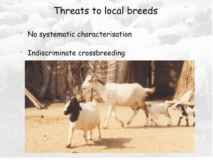 Threats to local breeds