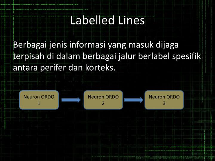 Labelled Lines