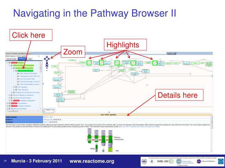 Navigating in the Pathway Browser II