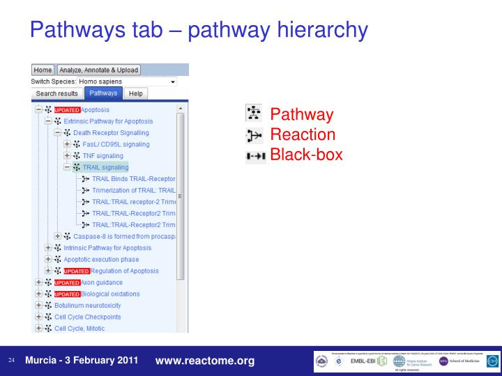 Pathways tab – pathway hierarchy