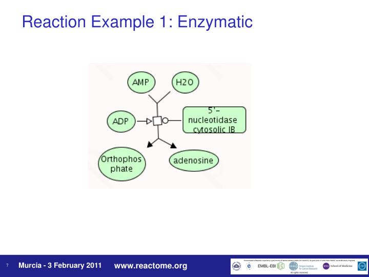 Reaction Example 1: Enzymatic