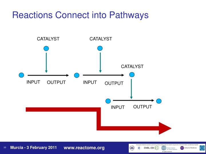 Reactions Connect into Pathways