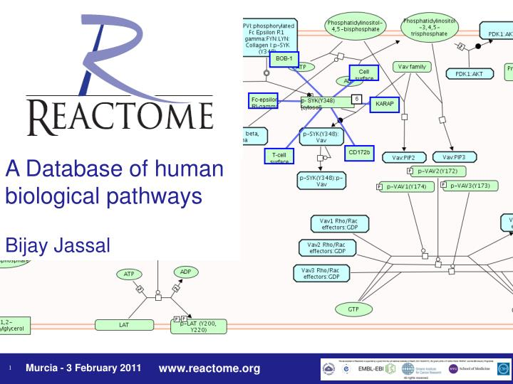 A Database of human biological pathways