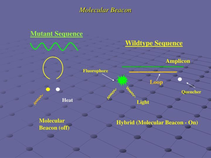 Molecular Beacon