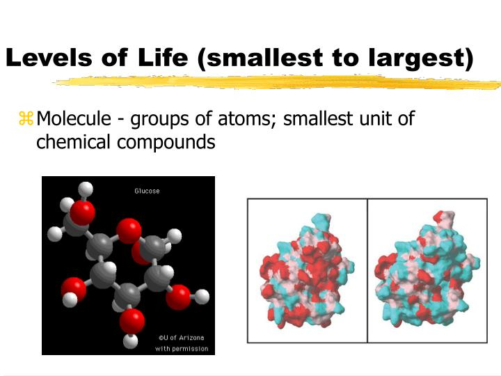 Levels of Life (smallest to largest)
