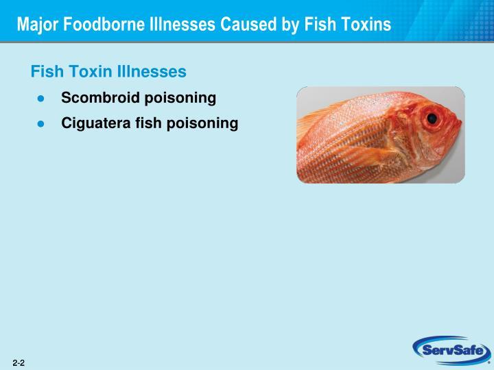 Major foodborne illnesses caused by fish toxins