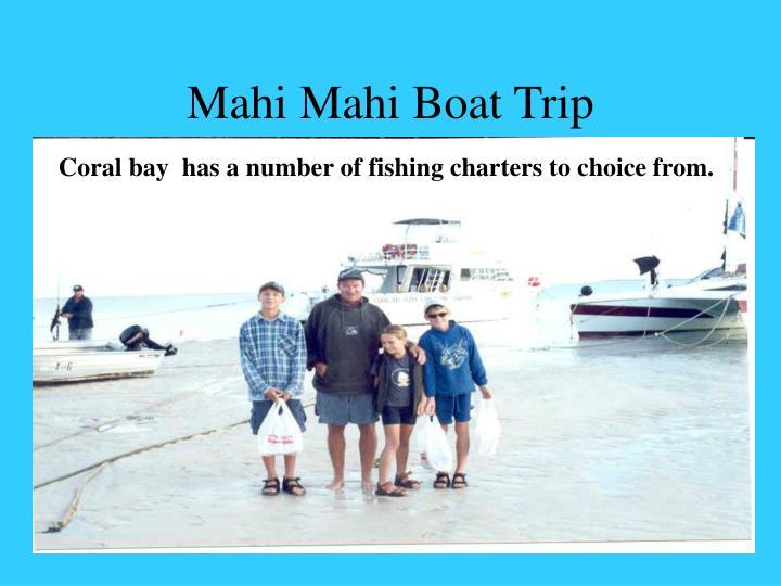 Mahi Mahi Boat Trip