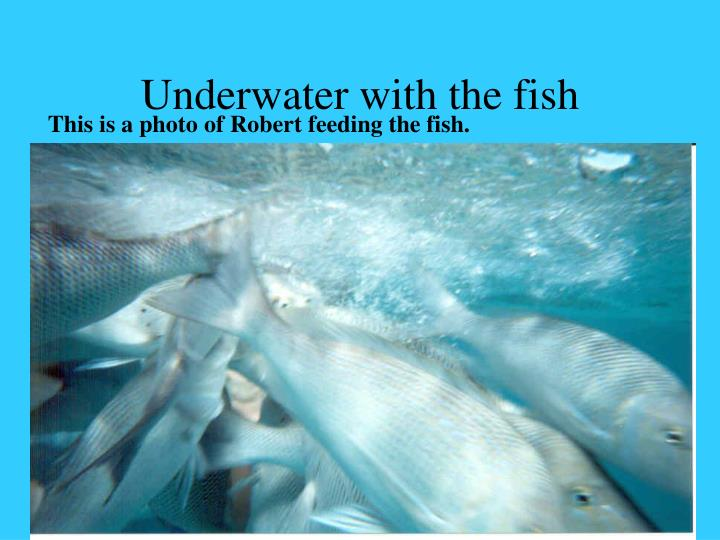 Underwater with the fish