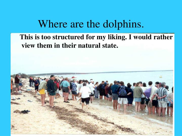 Where are the dolphins.