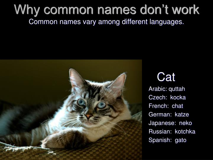 Why common names don't work