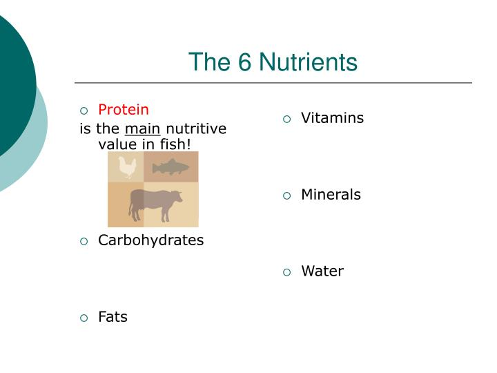 The 6 nutrients1