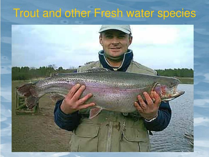 Trout and other Fresh water species