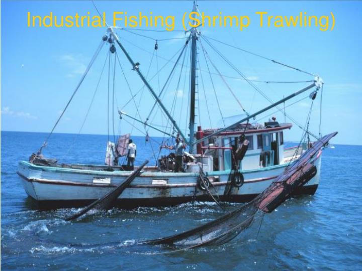 Industrial Fishing (Shrimp Trawling)