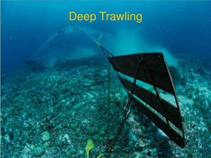 Deep Trawling