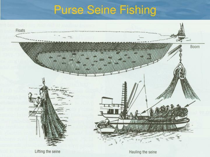 Purse Seine Fishing