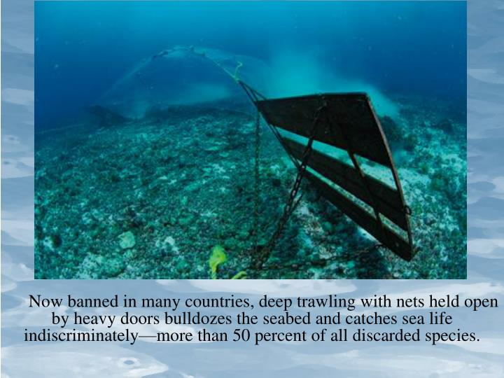 Now banned in many countries, deep trawling with nets held open by heavy doors bulldozes the seabed and catches sea life indiscriminately—more than 50 percent of all discarded species.