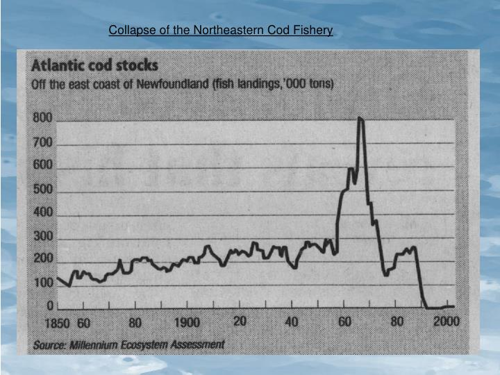 Collapse of the Northeastern Cod Fishery