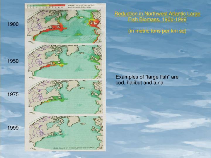 Reduction in Northwest Atlantic Large Fish Biomass, 1900-1999